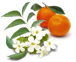 Sweet Orange and Neroli Ingredients Image